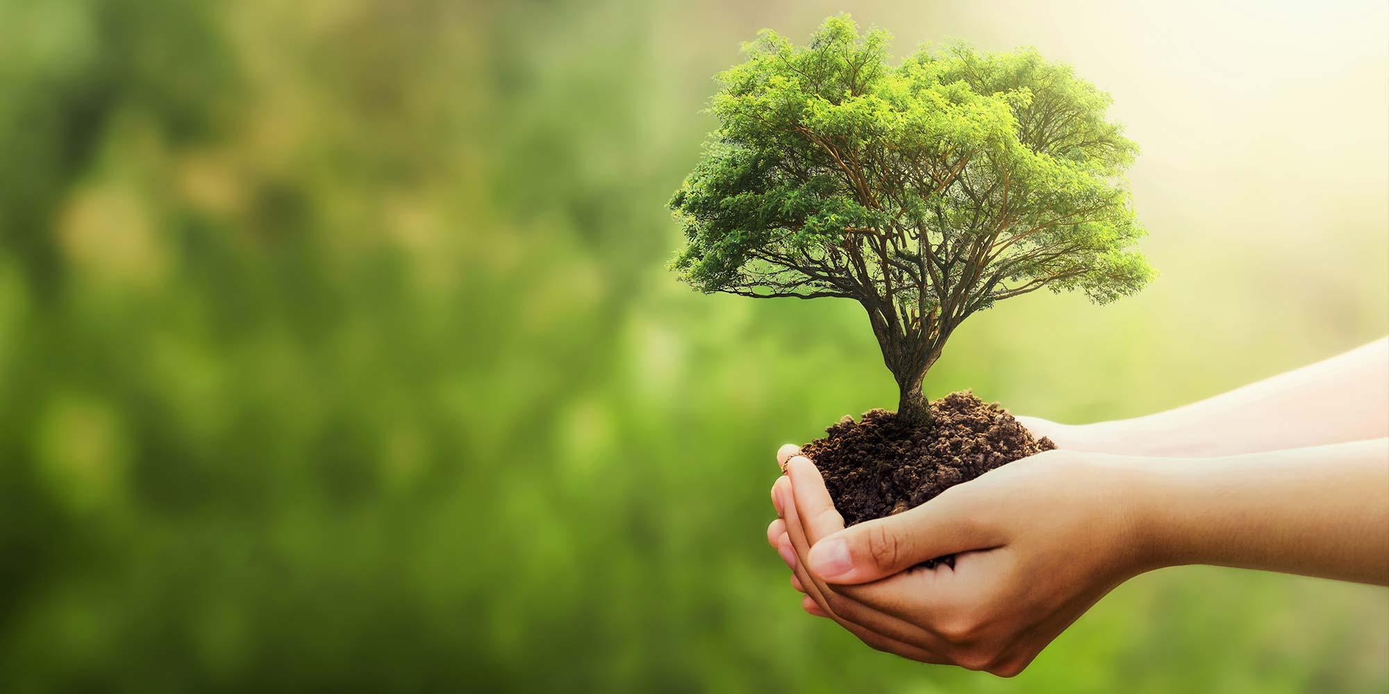 Direito e sustentabilidade: práticas que todo escritório deveria adotar